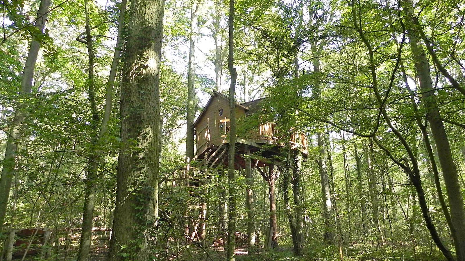 Cabane dans les arbres à Saint-Amand-les-Eaux dans le Nord