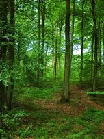 Forêt de Saint-Amand-les-Eaux dans le Nord